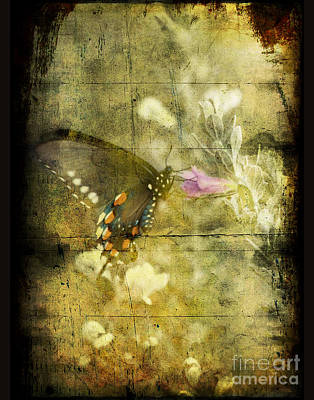 Photograph - Butterfly by Jim Wright