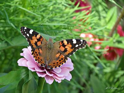 Photograph - Butterfly On Zinnia by MTBobbins Photography