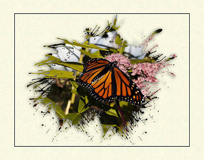 Photograph - Butterfly Splat by Thomas  Jarvais