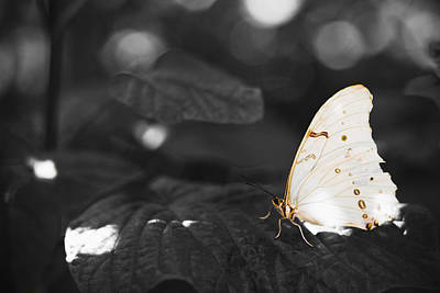 Butterfly Art Print by Bradley R Youngberg