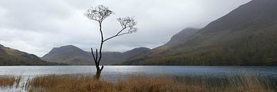 Photograph - Buttermere Tree by Nick Atkin