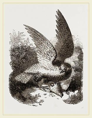 Buzzard Drawing - Buzzard by Litz Collection