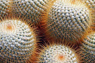Cactus Art Print by Jim McCullaugh
