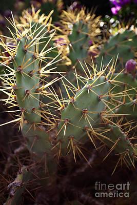 Photograph - Cactus by Kati Molin