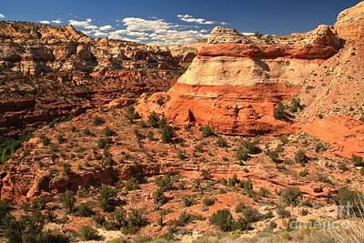 Photograph - Calf Creek Canyon Red Rocks by Adam Jewell