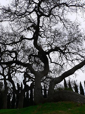 Photograph - California Oak Winter Sihlouette by Jeff Lowe