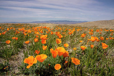 California Poppies In Bloom, Lancaster Art Print by Rob Sheppard
