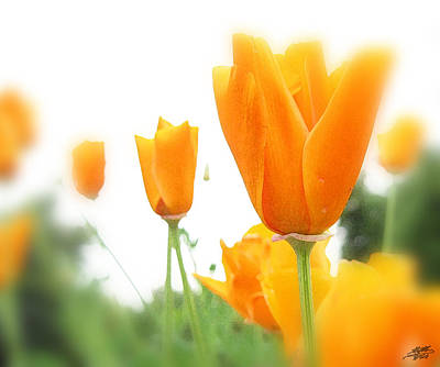 Digital Art - California Poppies by Steve Huang
