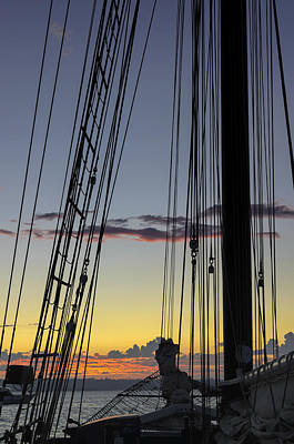 Photograph - Californian At Sunset by Marianne Campolongo