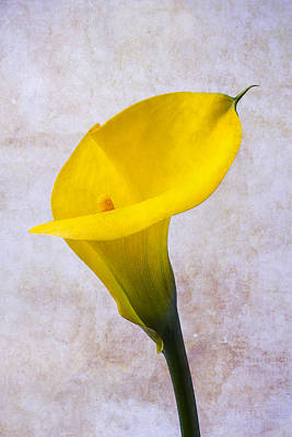 Calla Lily Beauty Art Print by Garry Gay