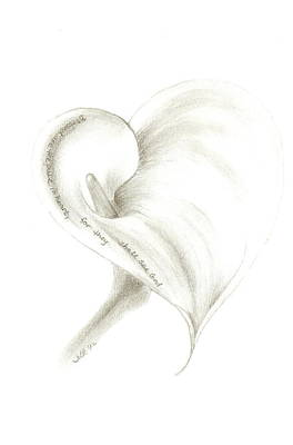 Drawing - Calla Lily by Jennie Richards
