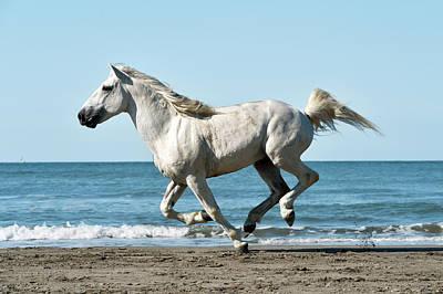 Camargue Horse Art Print by Dr P. Marazzi