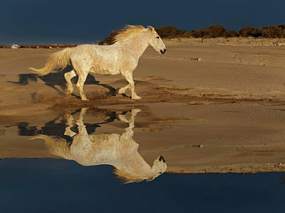 Adam Photograph - Camargue Horses And Reflection by Adam Jones