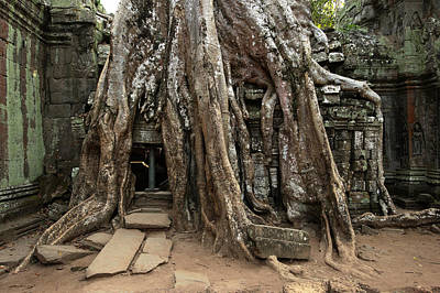 Cambodia, Siem Reap, Angkor, Ta Prohm Art Print by Tips Images