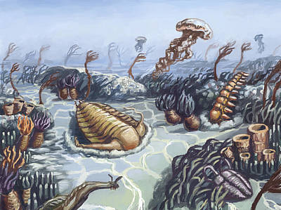Photograph - Cambrian Period, Illustration by Spencer Sutton