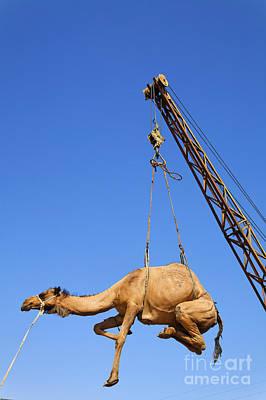 Lift Truck Photograph - Camel At The Ashgabat Sunday Market In Turkmenistan by Robert Preston