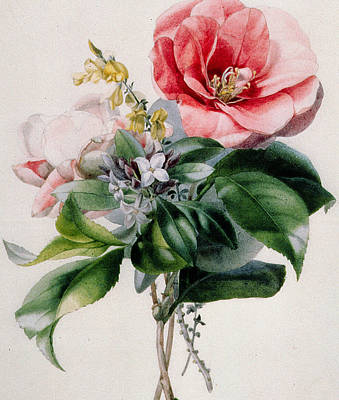 Camellia Painting - Camellia And Broom by Marie-Anne