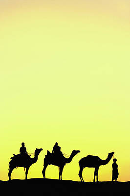 Camel Photograph - Camels And Camel Driver Silhouetted by Adam Jones