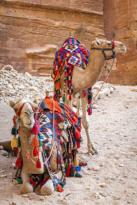Petra Photograph - Camels In Petra by Alexey Stiop