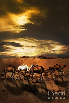 Camels Art Print by Jelena Jovanovic