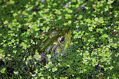 Photograph - Camo Frog by Dawn J Benko