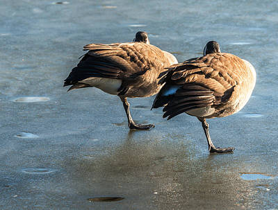 Photograph - Canada Geese At Rest by Edward Peterson