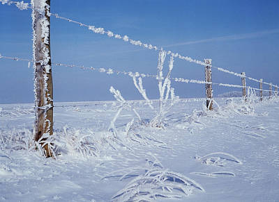 Wire Mesh Photograph - Canada, Manitoba, Dugald, Hoarfrost by Jaynes Gallery