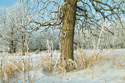 Hoarfrost Photograph - Canada, Manitoba, Winnipeg by Jaynes Gallery