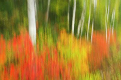 Abstract Movement Photograph - Canada, Ontario, Algonquin Provincial by Jaynes Gallery