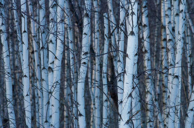 Quebec Photograph - Canada, Quebec, Yamaska National Park by Jaynes Gallery