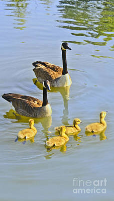 Photograph - Canadian Goose Family by Barbara Dean
