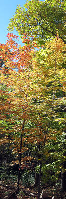 Canadian Wild Tall Trees Fall Season Nature Natural Beautiful Pleasing Scenes    Art Print