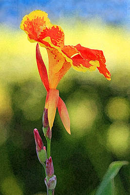 Photograph - Canna Lily by Karen Adams
