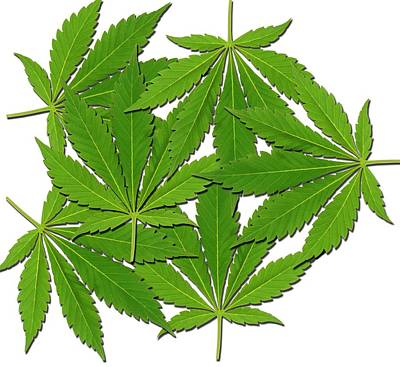Cannabis Leaves Art Print by Victor De Schwanberg