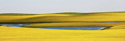 Photograph - Canola Field by Imaginegolf