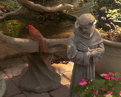 Photograph - Cardinal And St. Francis by Don Wolf