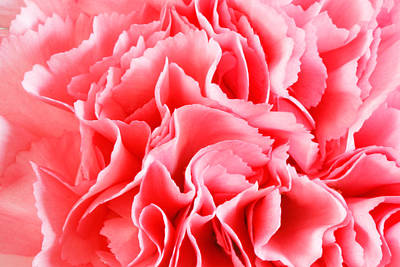 Photograph - Carnation Flower by Peter Lakomy