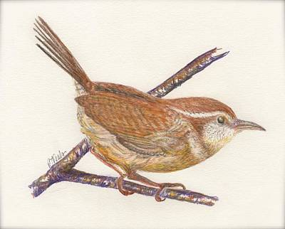 Carolina Wren Drawing - Carolina Wren by Bev Veals