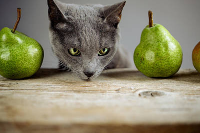 Royalty-Free and Rights-Managed Images - Cat and Pears by Nailia Schwarz