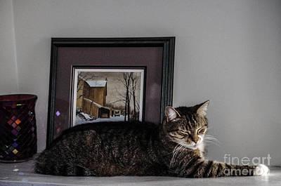 Cat At Rest Art Print
