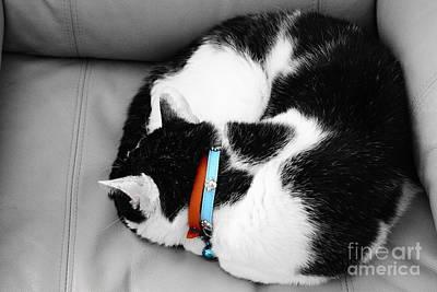 cat Art Print by Bobby Mandal