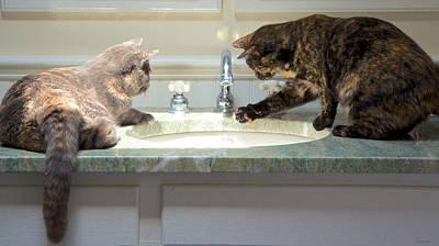 Cat Curiosity Art Print