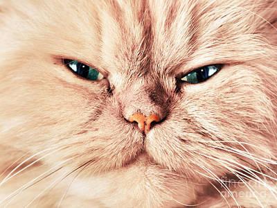 Expression Photograph - Cat Face Close Up Portrait by Michal Bednarek