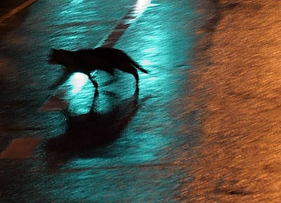 Photograph - Cat In The Night by Cora Wandel