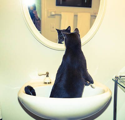 Photograph - Cat In The Sink by Susan Stone