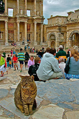 Library Of Celsus Photograph - Cat Near Library Of Celsus In Ephesus-turkey by Ruth Hager