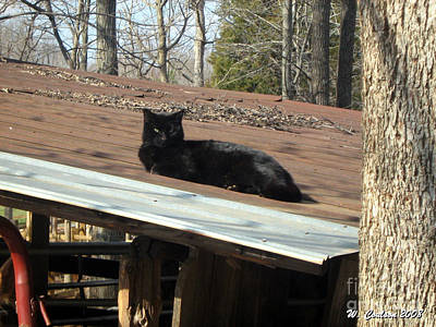 Art Print featuring the photograph Cat On A Tin Roof by Wendy Coulson