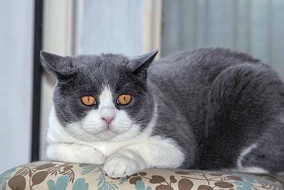 Cat Posing Art Print