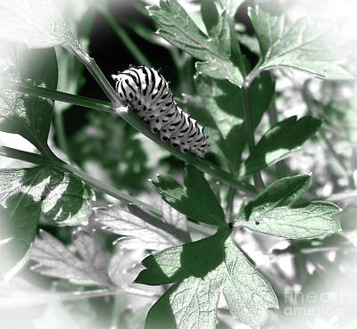 Photograph - Macro Caterpillar Art Print by Maggie Vlazny