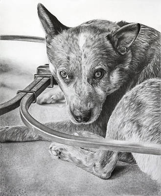 Cattle Dog Drawing - Cattle Dog Relaxing by Karen Broemmelsick